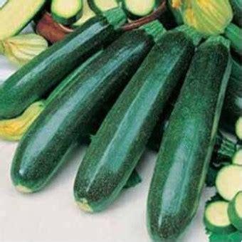benih zukini courgette zucchini