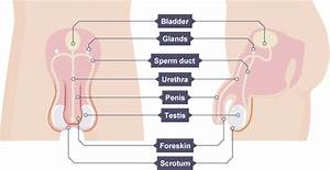 Igcse Biology 2017  3 8  Understand How The Structure Of
