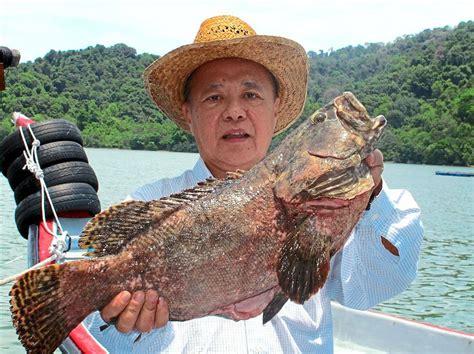 grouper fish taste fillet