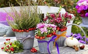 Dekoideen Herbst Winter : herbst pflanzen und deko f r balkon und terrasse deko pinterest ~ Markanthonyermac.com Haus und Dekorationen
