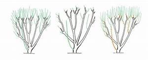Taille De L Hibiscus : quand tailler l hibiscus lhibiscus dintrieur varits ~ Melissatoandfro.com Idées de Décoration