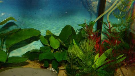 offre d emploi aquarium mon aquarium d eau douce de 60 l page 2