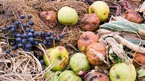 Power your home with kitchen scraps? Scientists figure out ...