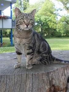 Wie Fange Ich Eine Katze : wie verhalte ich mich wenn mir eine katze zugelaufen ist ~ Markanthonyermac.com Haus und Dekorationen
