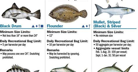 coastal species florida saltwater fishing regulations