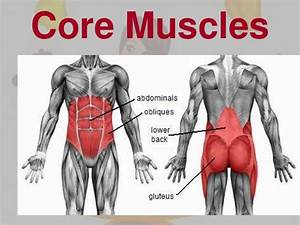 Importance of the core muscles | Physio Fitness