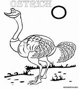 Ostrich Coloring Pages Bird Print sketch template