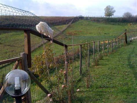 recinzioni per gatti giardino recinzioni antifuga gatti trattamento marmo cucina