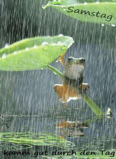 die  besten bilder zu regen   regen