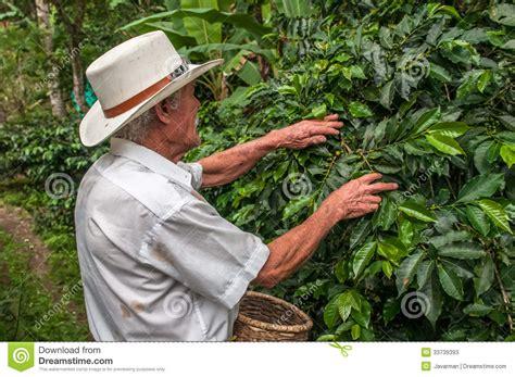 SALENTO, ZONA CAFETERIA, COLOMBIA   November, 28: Old Farmer Har Editorial Stock Photo   Image