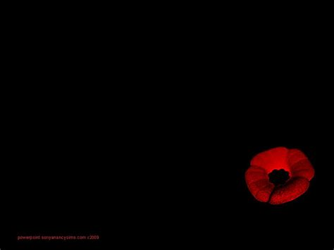 poppy images free remembrance remembrance day poppy wallpaper www imgkid com the image kid has it