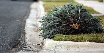 city of plymouth to recycle real christmas trees wtca fm