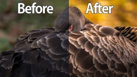 lightroom cc  wildlife photography editing tutorial