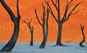 Ghost Trees Namibia