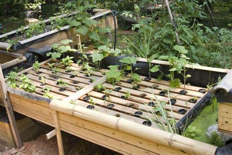 fish aquaponic garden system visit  personal diy