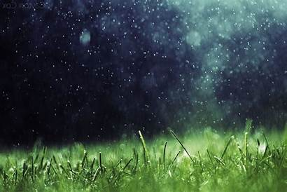 Rain Grass Nature Desktop Backgrounds Wallpapers Artwork