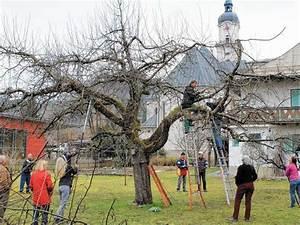Alten Walnussbaum Schneiden : kiefersfeldener schneiden 100 jahre alten apfelbaum ~ Lizthompson.info Haus und Dekorationen