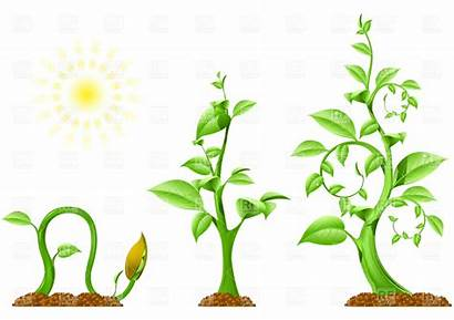 Clipart Planting Growing Webstockreview Flower Seed