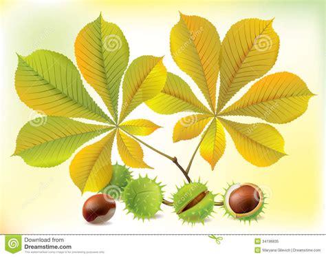 clipart castagne castagne e foglie di autunno illustrazione vettoriale