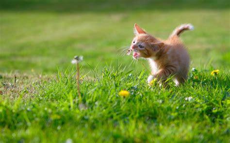 wallpaper cat green grass  animals