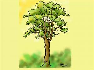 How to Draw a Detailed Tree: 7 Steps (with Pictures) - wikiHow