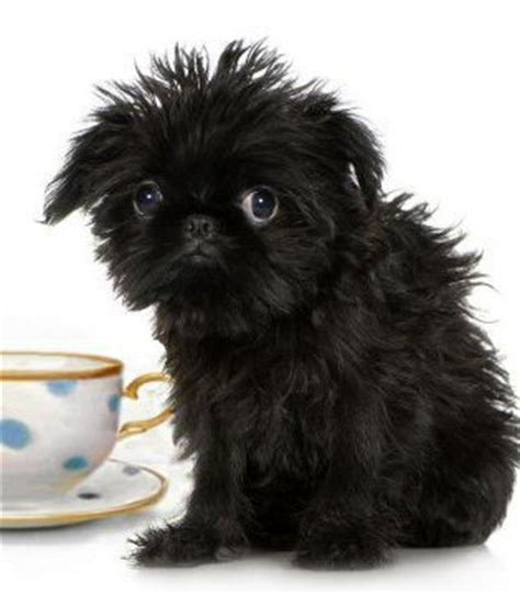 small dog breeds with picture links and the most complete