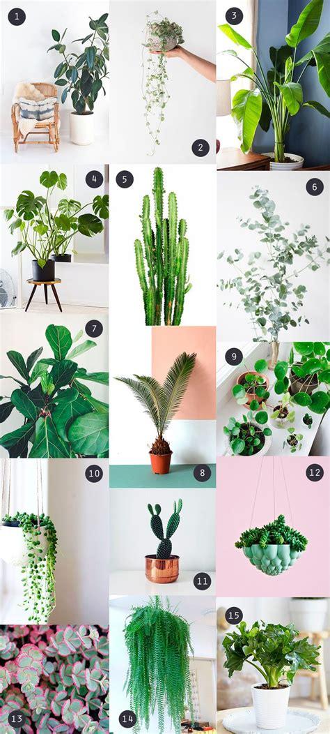 plante cuisine decoration les 25 meilleures idées de la catégorie plante d 39 intérieur