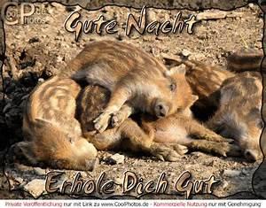 Bilder Schlaf Gut : gute nacht lustig gute nacht erhole dich gut ~ Orissabook.com Haus und Dekorationen