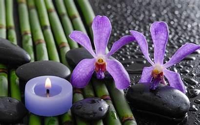 Orchid Orchids Purple Bamboo Desktop Flower Water