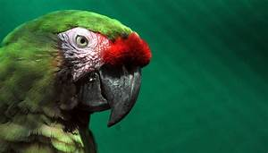 2000-year-old parrot head discovered in Mexican burial ...