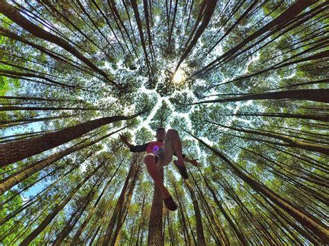 pesona keindahan hutan pinus imogiri