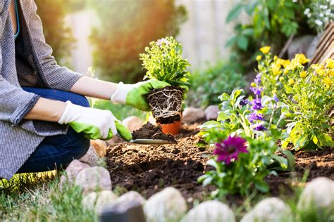 Blumenbeet Anlegen » Planung, Beetvorbereitung Und