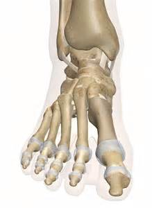 Anatomy of Foot and Ankle Bones