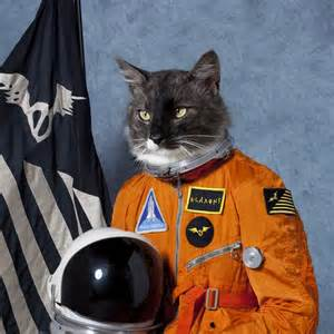 space cats cats cat in space