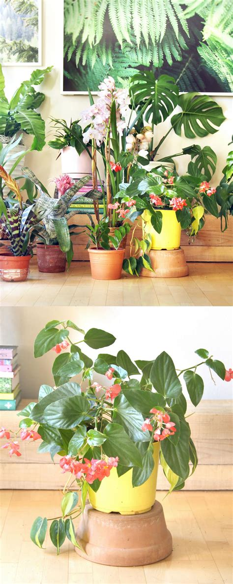 18 Most Beautiful Indoor Plants ( & 5 Easy Care Tips