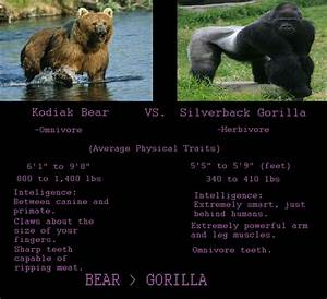 Image Gallery kodiak bear vs gorilla