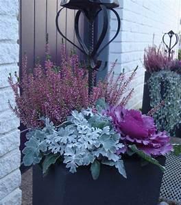 Winterpflanzen Für Balkonkästen : silberblatt zierkohl und heidekraut in einem pflanzk bel deko haus pinterest zierkohl ~ Indierocktalk.com Haus und Dekorationen