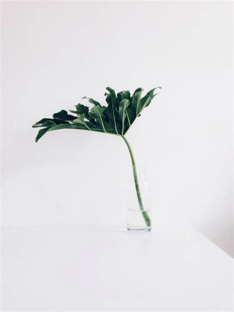 minimalist plants clear minimalism wedding style inspiration lane