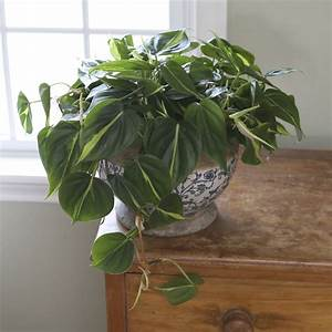 Help, The, Environment, With, Houseplants, From, Costa, Farms