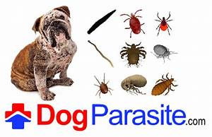 parasites dogs