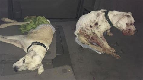 petition  neglected dogs dead  terril iowa changeorg