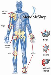 All Of The Body U0026 39 S Joints Are Reciprocal
