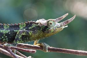 Reptiles and Amphibians – Karim Iliya Photography ...