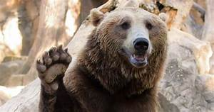 Bears, As, Pets, Is, It, Safe, Can, You, Actually, Raise, Pet