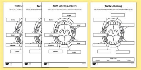 teeth labelling worksheet teeth ourselves my labels