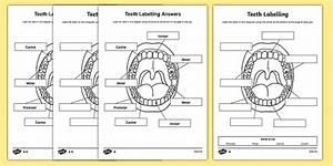 Teeth Labelling Worksheet
