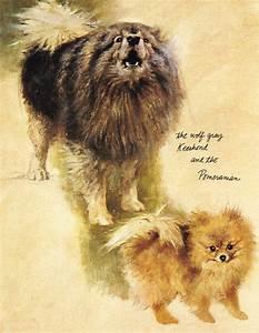 Keeshond & Pomeranian | My Happy Things | Pinterest