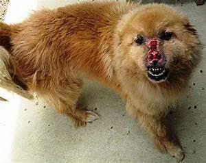 Small Fluffy Dog Breeds - Dog Training Home | Dog Types