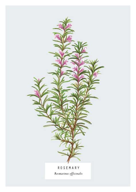 313 Best Herbology Images On Pinterest  Harry Potter