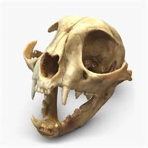 cat skull 3d c skull scan model